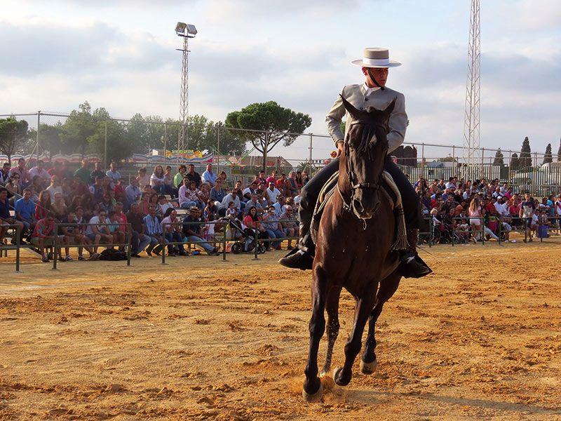 Doma-Vaquera