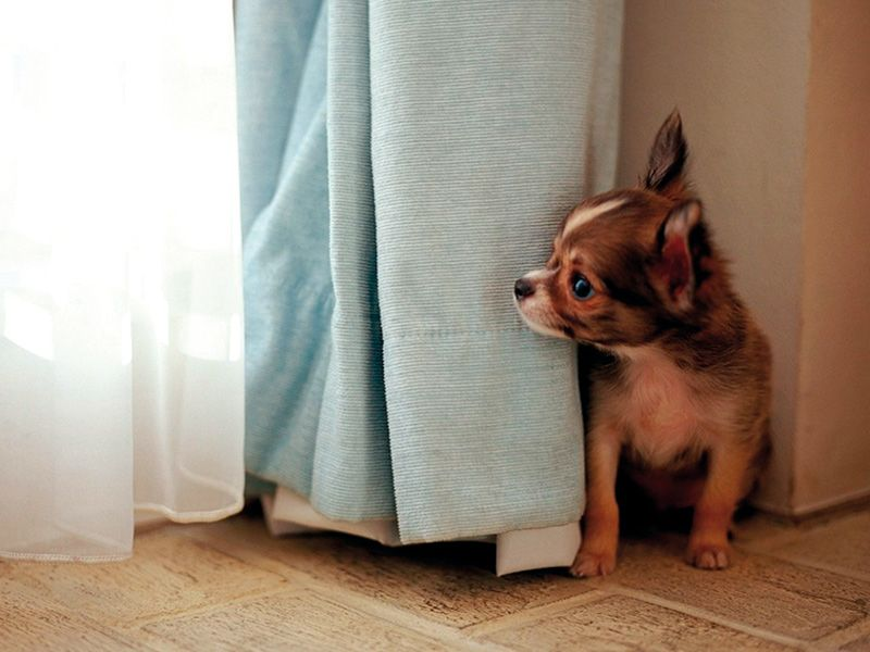 perro-escondido
