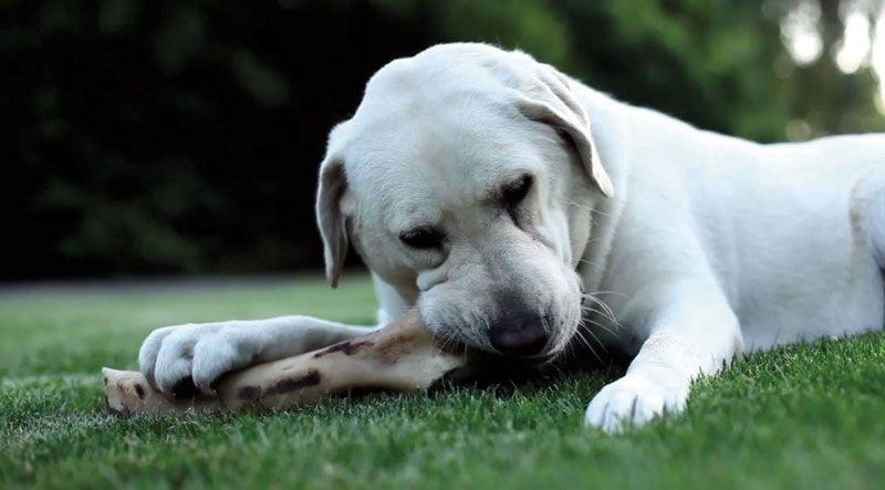 perro-mordiendo