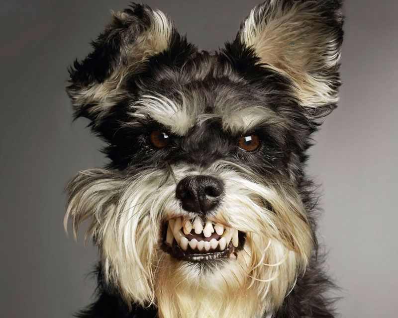 perro-risitas