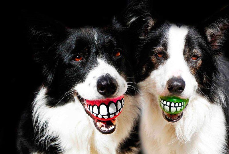 perros-dentadura
